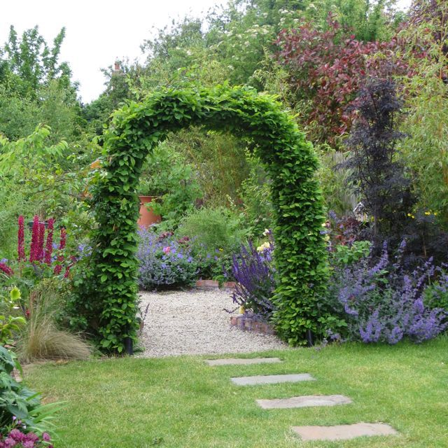 Hornbeam arch / Carpinus, leads from one part of the garden to the next.