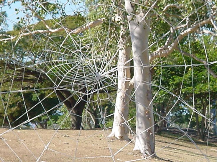 Two Webs