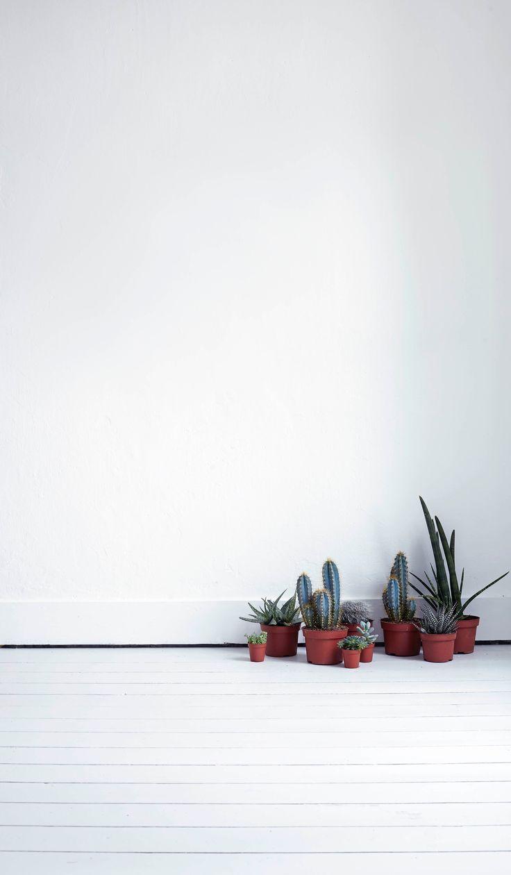 Para um jardim minimalista, mantenha os vasos juntos num canto do ambiente. Eles podem até ficar no chão. #jardim #vasos