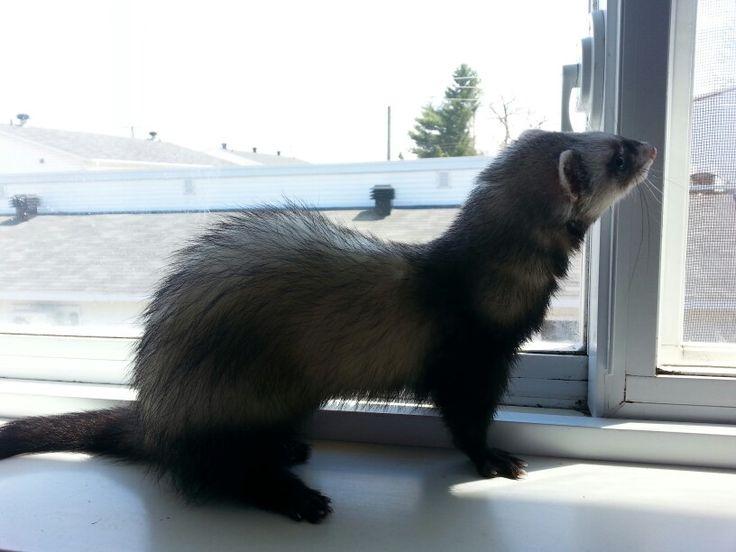 Exploration du bord de la fenêtre