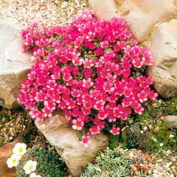 Compre grés vermelho estofado online da Gärtner Pötschke   – Gardening