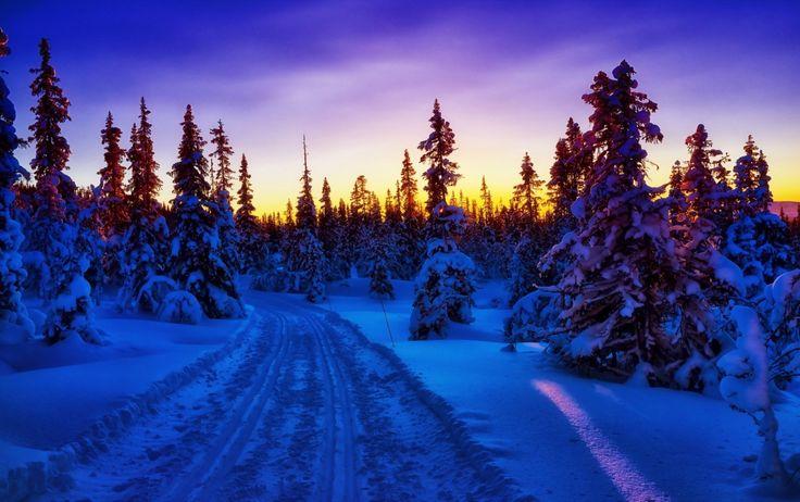Invierno Nieve. Bosque Road. Зимний снег. Лесная дорога