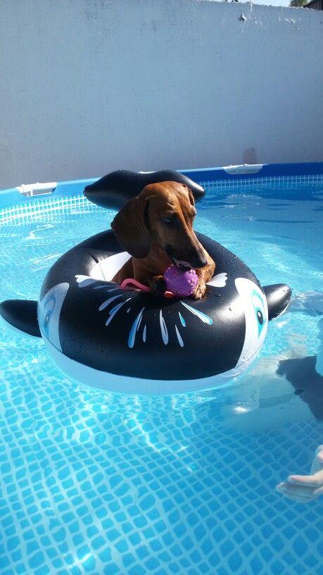 Disfruta su piscina