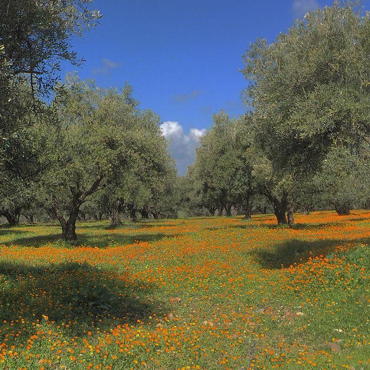 moulay idris, morocco 150213