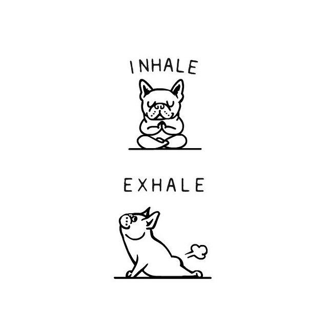 Inhale Exhale by @huebucket  for @pugsgym  #frenchie #yoga