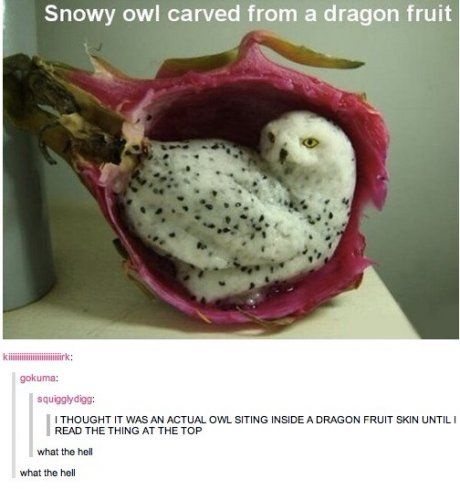 I thought it was a real owl after I read the caption
