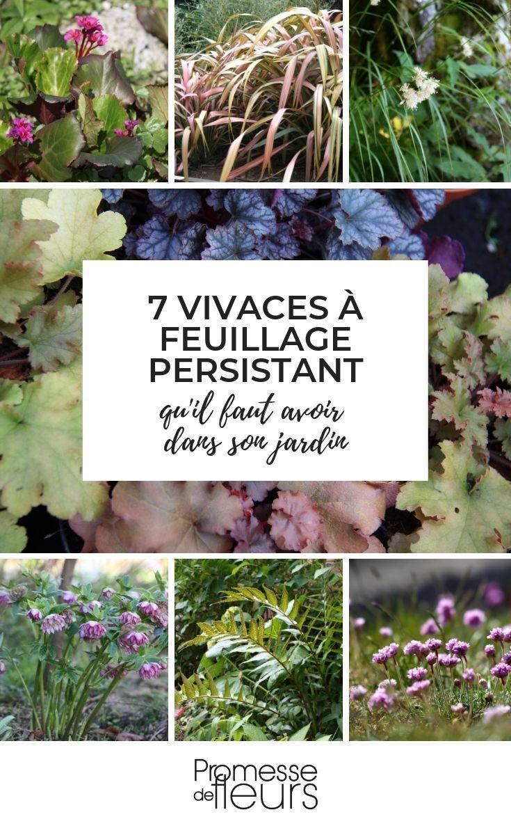 7 Plantes Vivaces A Feuillage Persistant Qu Il Faut Avoir Dans Son Jardin Jardin Jardinage Plant Fleurs Vivaces Plein Soleil Feuillage Persistant Vivaces