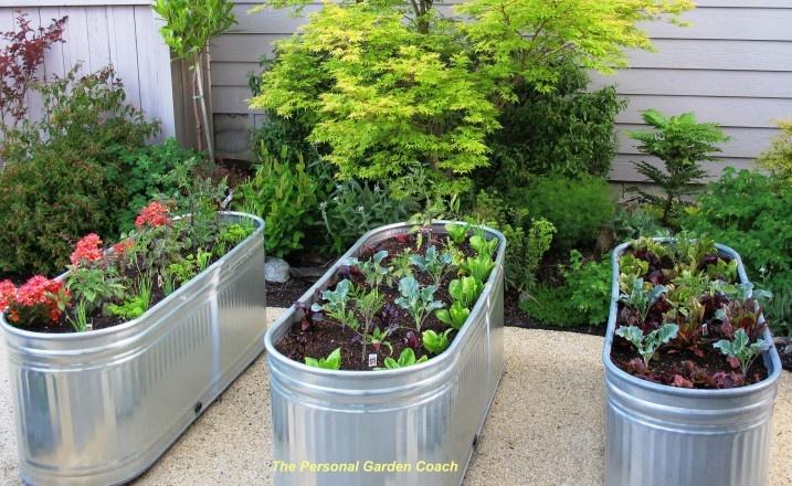 Stock Tank Edibles Vegetables Herbs Pinterest