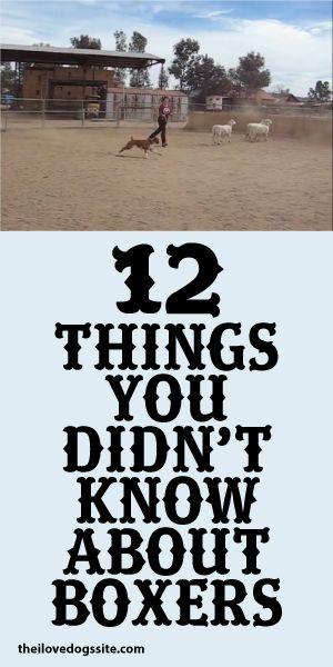 12 Things You Didn't Know About Boxers