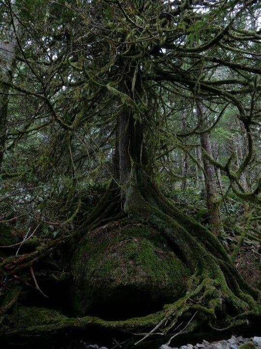 Vancouver Island-by angelindaskyz
