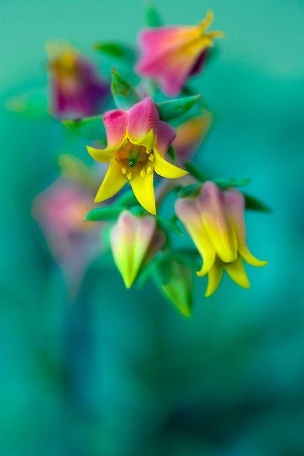 ~~ by alan shapiro photography ~~