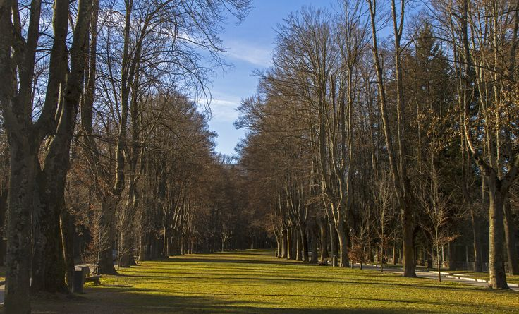 Quietness - The Passeig de Maristany in the outskirts of the town of Camprodon is a quiet place to have a walk between the trees. In winter, it uses to be covered with snow, but not this winter, because of the warm temperatures.