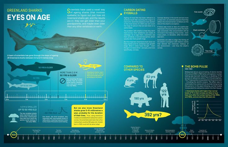 We don't know much about what Greenland sharks do, but we do know that whatever they do, they do it painfully slowly – and this results in an astonishingly long lifespan. Peter Bushnell and his colleagues recently published a landmark study in Science that reveals just how long these enigmatic sharks live.