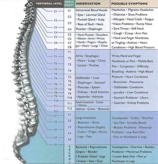 Spinal Nerve Chart | The Spine Clinic, Dr. Anthony Caruso, West Palm Beach, Lake Worth, and Palm Spring FL Local Chiropractor (561) 963-6227