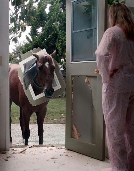 heheehehe!! That would be the best ever to look over and see a horse peaking in your doggy door!!