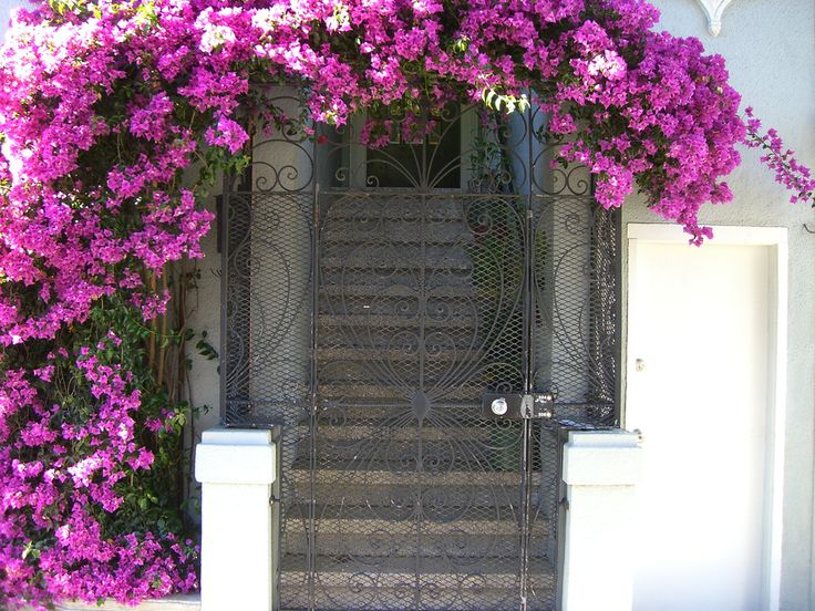 Climbing plants that flower are perfect for framing gates and arched entrances or windows and doors.