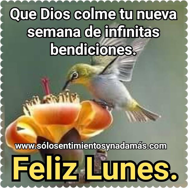 Que Dios Colme Tu Nueva Semana De Infinitas Bendiciones Feliz Lunes Bendiciones Frases De Buenos Dias Imagenes De Feliz Lunes
