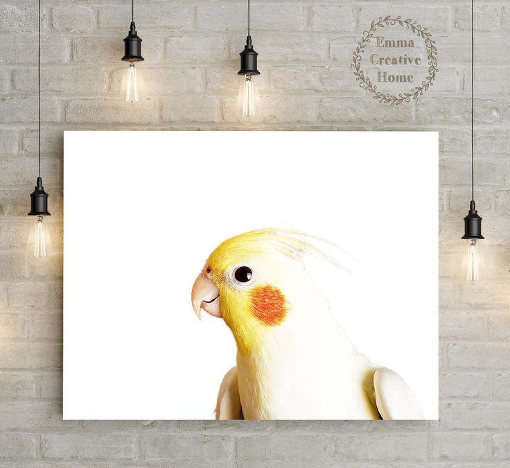 6$ Parrot Print, Digital Download, JPG, Animal Art ,Nature, Bird Dekor, Wall art Print, Digital Print,Bird Art by EmmaCreativeHome on Etsy