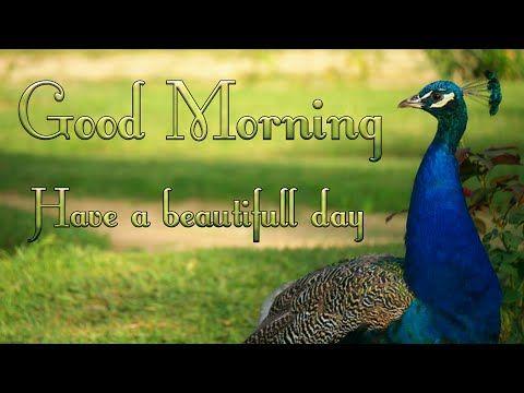 good morning video songs for WhatsApp - YouTube