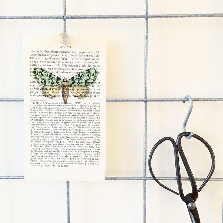 Groene vlinder op ons showrek / wandrek