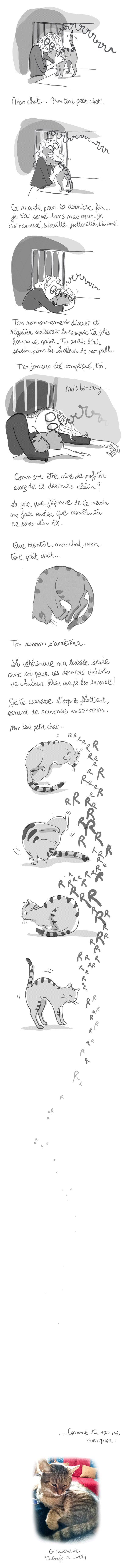 Flutiou-diglee, gato. mascota