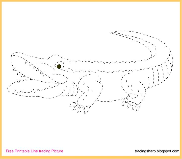 free tracing line printable alligator tracing picture