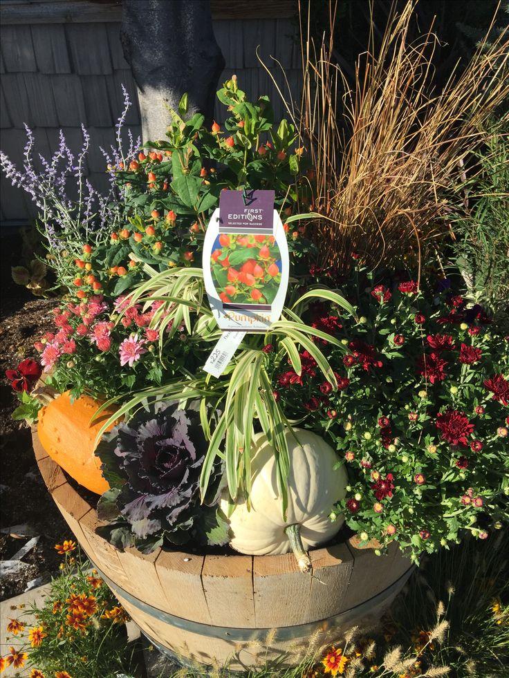 Pin by Sheri Teel Bashaw on autumn Planter pots