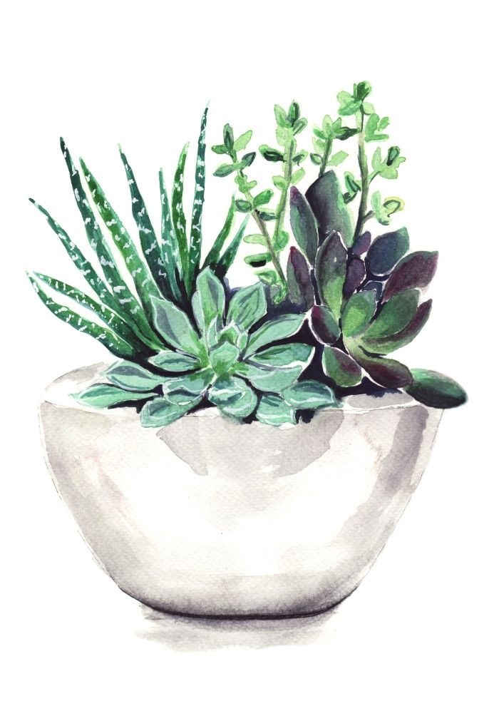 Succulents Art Print by Bridget Davidson