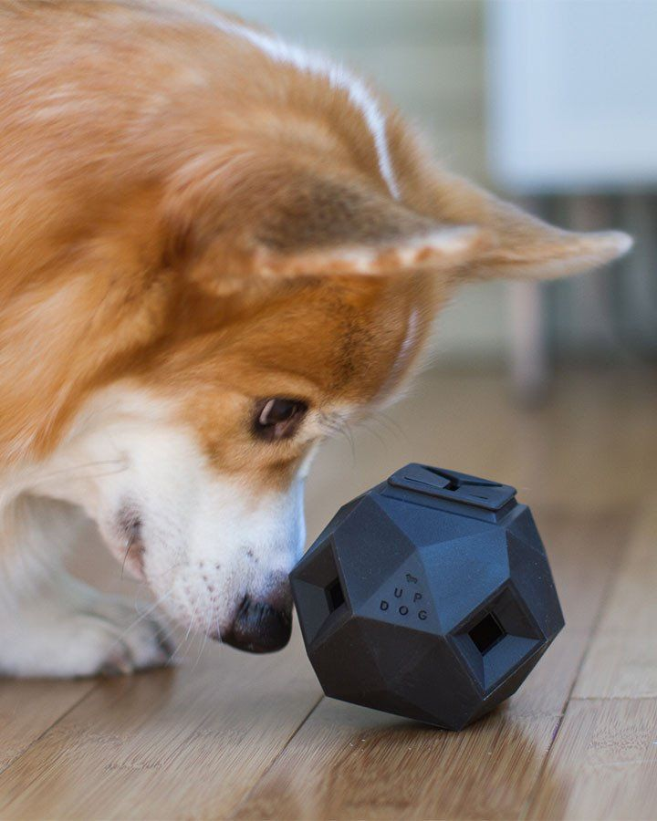 Aktivitetslegetøj til hunde - The Odin - Grå - Petlux