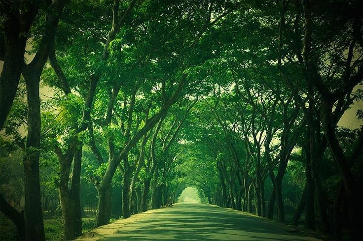 Make Dhaka a garden city