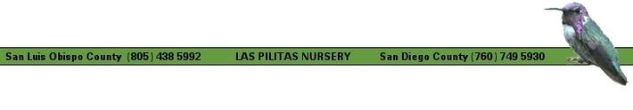 Las Pilitas: San Luis Obispo and San Diego Counties - best site for CA native plants