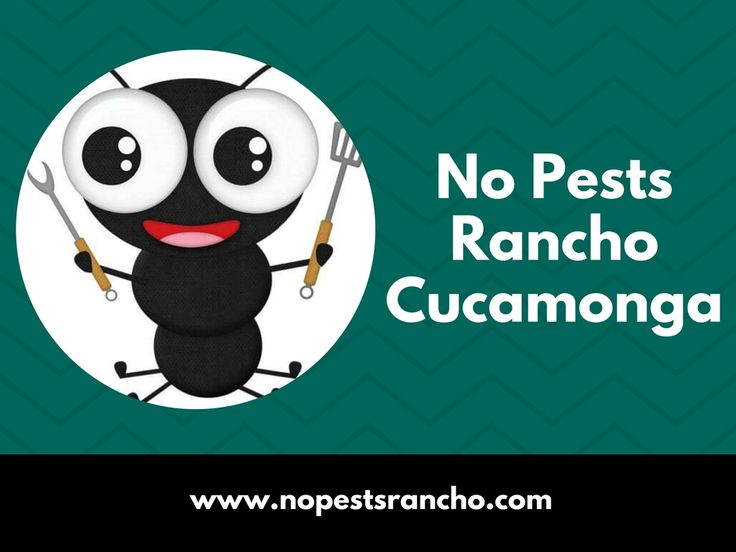 No Pests Rancho Cucamonga is the best pest control company in Rancho Cucamonga. They provide high-quality pest control services in Rancho Cucamonga and all the surrounding cities.