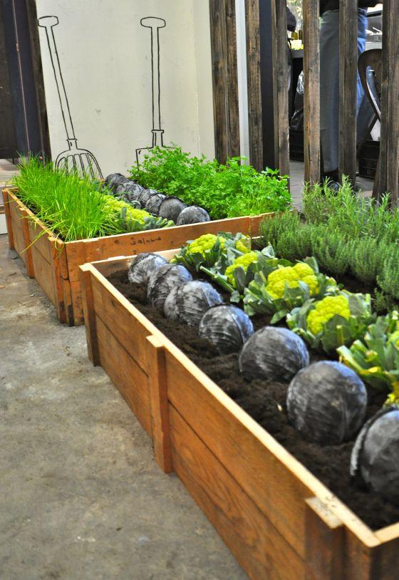 45 besten pflanzideen bilder auf pinterest zimmerpflanzen wohnungen und balkon. Black Bedroom Furniture Sets. Home Design Ideas
