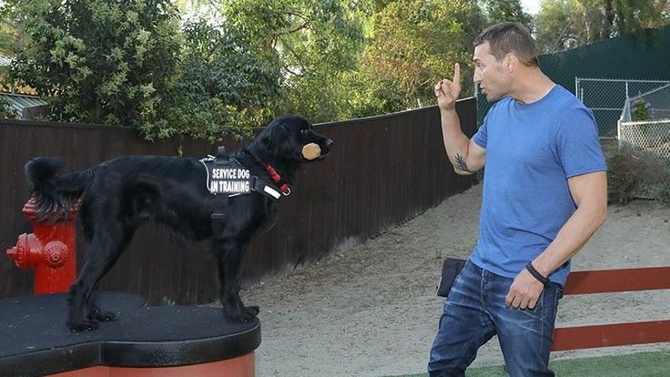 Getting To Know Lucky Dog Trainer Brandon McMillan CBS