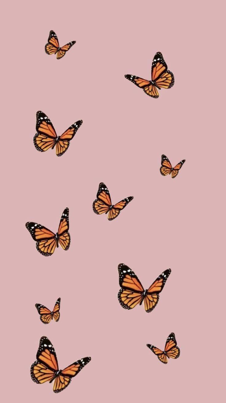 Wallpapers Butterfly Aesthetic Lockscreen In 2020 Iphone Background Wallpaper Butterfly Wallpaper Aesthetic Iphone Wallpaper
