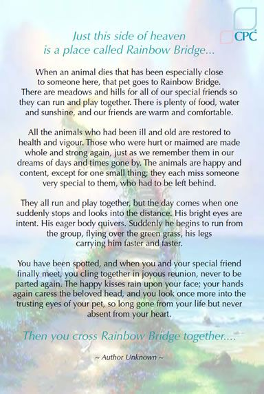 rainbow bridge a lovely poem provided some comfort to us when our beloved collie jack passed away. We had 14 years of happy memories and forever in our hearts.