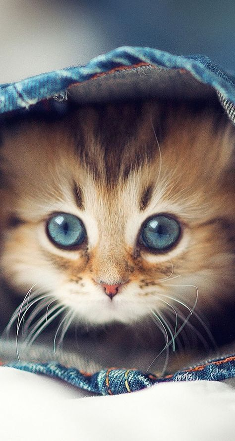 Cutest cats Tap the link for an awesome selection cat and kitten products for your feline companion! http://www.mainecoonguide.com/kittens/