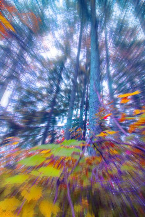 Fall Trees Background Wallpaper Just Like Electric Forest Trippy Pictures Psychedelic
