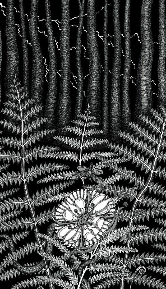 Kwiat Paproci Marek Hapon