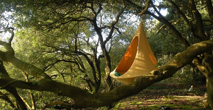 cacoon hanging