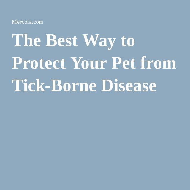 The Best Way to Protect Your Pet from Tick-Borne Disease