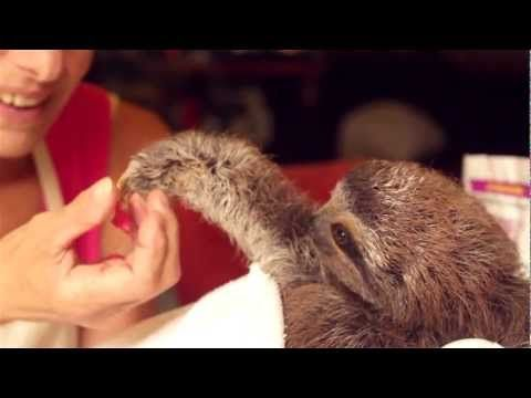 http://twentytwowords.com/2013/02/23/baby-sloth-woos-a-cooing-lady-with-flower-pedals/