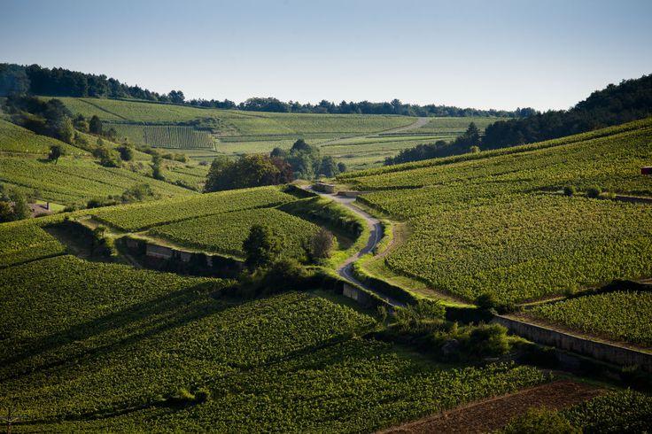 Vignoble Bourgogne