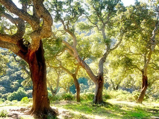 Escapades depuis la Costa del Sol Andalousie, Parc