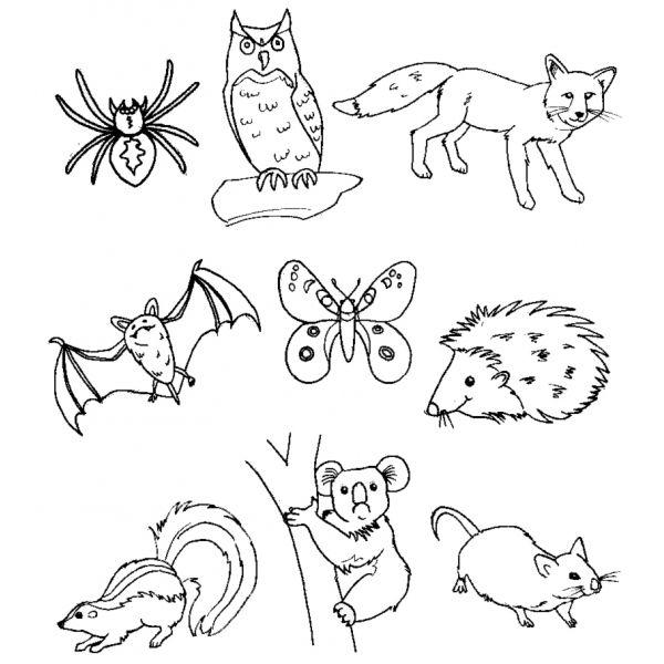 Disegni Animali Del Bosco Per Bambini Cerca Con Google Disegno Di Animali Animali Del Bosco Disegnare Animali