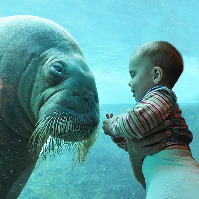 Paar jaar geleden, onze kleindochter heeft een walrus vriendje. View years ago our granddaughter and her walrusfriend. #dolfinarium #dolfinariumharderwijk #veluwe #walrus #zoogdier #animal #marine #mammal #cute #friends #harderwijk #morsa  #walross #valross #morse #zoo #tricheco #granddaughter #photooftheday #igbest_shotz #igbest