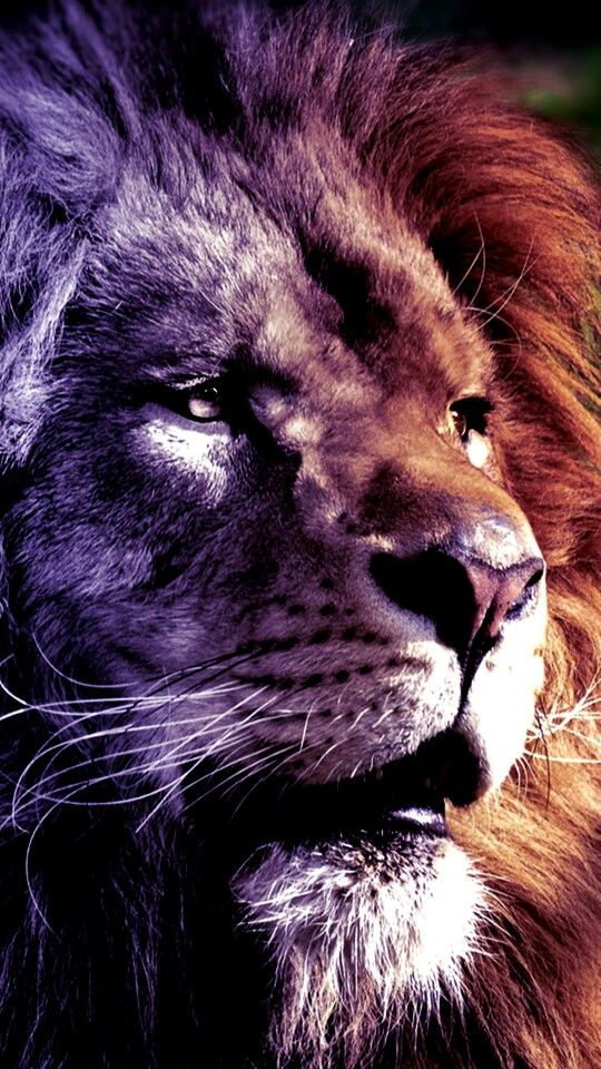Best 25+ Lion wallpaper ideas on Pinterest | Lion wallpaper iphone, Iphone wallpaper king and ...