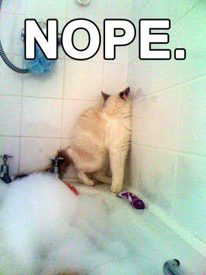 Bath time: Hells No, Cat Bath, Funny Cat, Too Funny, Bubbles Bath, Funny Animal, So Funny, Bath Time, Baby Cat