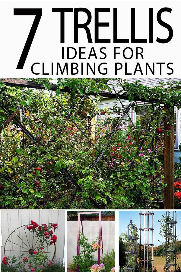 7 Trellis Ideas For Climbing Plants