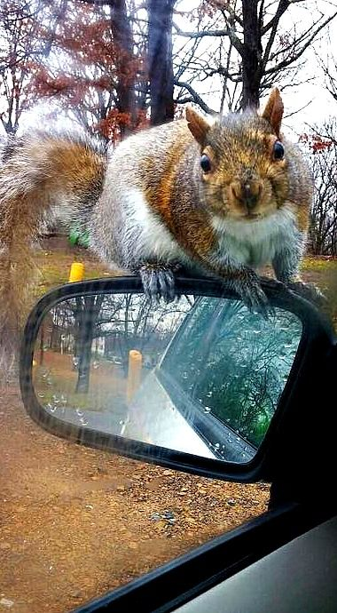 It's raining out here...can I get a lift?